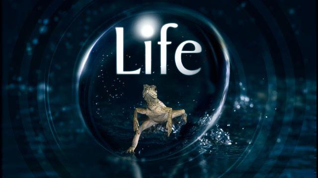 زندگی (مستند)