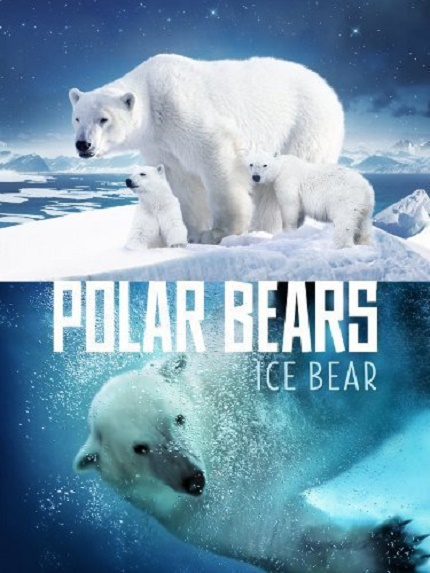 Polar-Bears-Ice-Bear-2013