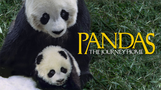 پاندا:بازگشت به خانه (مستند)